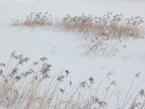 Zbiornik Warszawska po śnieżycy