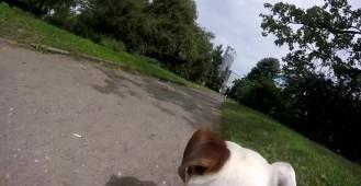 Tawerna - Lokal przyjazny psiakom