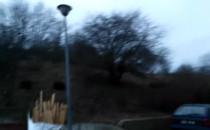 Dziki obok budynków przy Słowackiego w...