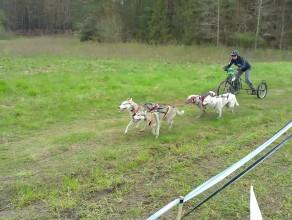 Rowerowe psie zaprzęgi