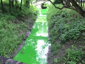 Zielona Strzyża