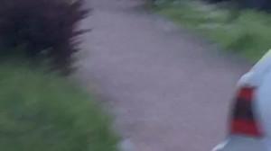 Dziki zostały zauważone na ulicy Havla