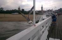 Mewa na molo w Sopocie
