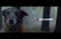 Stop porzucaniu zwierząt