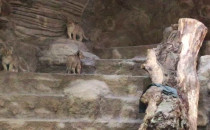 Małe lwiątka w Zoo
