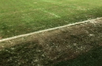 Jedyna zielona trawa w Gdyni