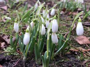 Kwiaty kwitną w Parku Oliwskim