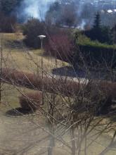 Pożar traw na Oruni Górnej