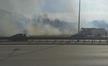 Płonące trawy przy Słowackiego