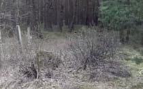 Samochód w lesie na wyspie sobieszewskiej