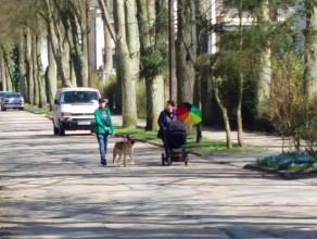 Matka z dzieckiem w wózku na jezdni