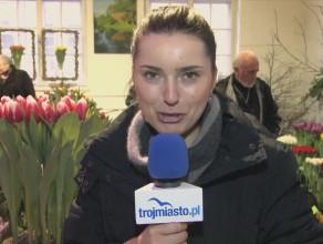 Nowy tulipan o nazwie Lech Wałęsa.