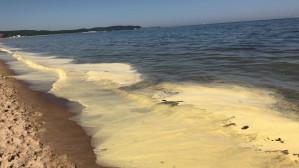 Żółta woda na plaży w Sopocie