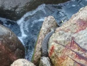 Wąż na Bulwarze Nadmorskim w Gdyni