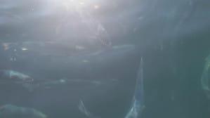 Ferma łososi norweskich