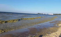 Zanieczyszczona woda na plaży Brzeźno