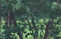 Dziki znów w Oliwie