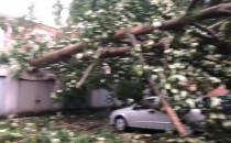Powalone drzewa na ulicy Rajskiej i ulicy...