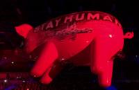 Koncert Roger Waters - latająca świnia
