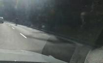 Rowerzysta na leśnym odcinku Słowackiego w...