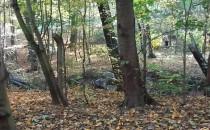Wycinka lasu w gdansku dla interesantów...