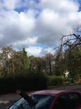 Konar drzewa uszkodził auto na Traugutta w Gdańsku