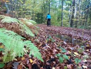 Leśne trasy rowerowe: od Osowy do Źródła Marii
