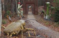 Leśny Ogród Botaniczny w Marszewie