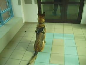 """Dacja - policyjny pies """"od narkotyków"""""""