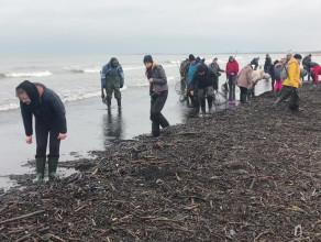 Zbieranie bursztynu na plaży