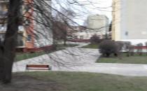 Dziki hasają na Pustkach Cisowskich