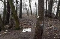 Dzikie wysypisko w lesie na VII Dworze
