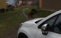 Dziki brunch na podwórku ul....