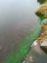 Dziwna substancja w zbiorniku Jabłoniowa