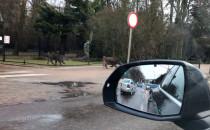 Dziki na Opata Rybińskiego w Oliwie