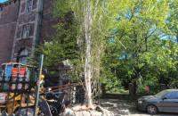 Jeżdżące drzewo