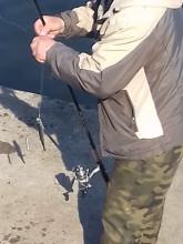 Łowienie śledzi