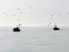 Sopoccy rybacy i ich świeże ryby