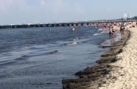 Brudna woda przy plaży w Sopocie