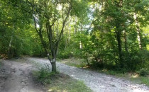 Spokojny spacer w lesie. Przy granicy...