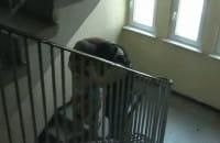 Policjanci z Gdańska rozbili grupę przestępczą