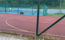Dzik chce zagrać w kosza na boisku w Gdyni