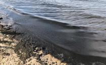 Glony na plaży w Sopocie