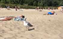 1 września na plazy Mewa z parciem na szklo