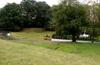Dziki w pobliżu szkoły na Karwinach