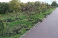 Dzik rekordzista, przeorał kilometr trawnika