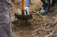 Pracownicy trójmiejskich firm zasadzili tysiące drzew