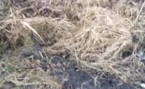 Dziki zryły trawniki przy Ergo Arenie