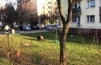 Polowanie na dzika w Sopocie