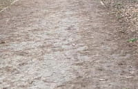 Pies biega luzem w parku Reagana